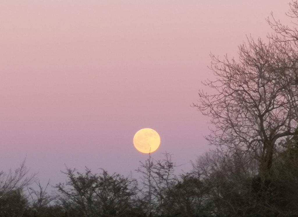Suffolk moon Xtrahead