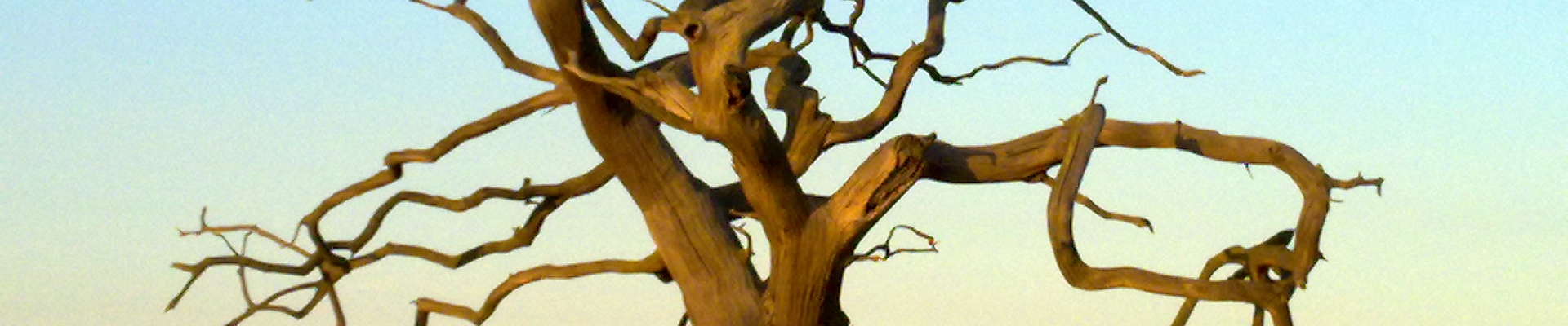 gnarled tree River Alde Suffolk by Lindsay Want