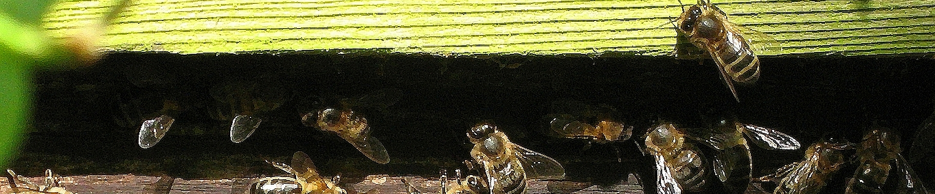 Busy bees by their hive
